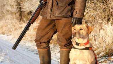 Die Jagd in Ungarn